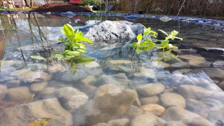 Wir erstellen Ihren Fischteich im Garten